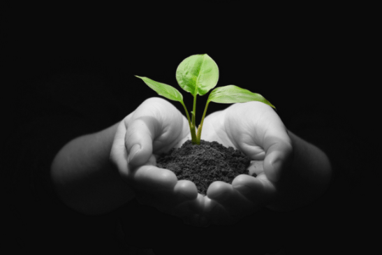 Person holding sprouting seed in soil in hands.